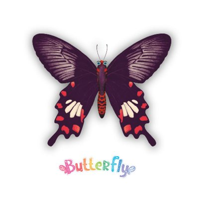 Wholesaler of Expositor Butterfly